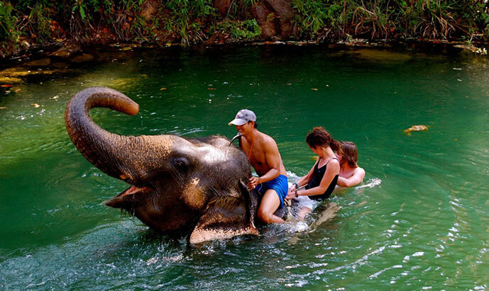 thailand-elephant (1)